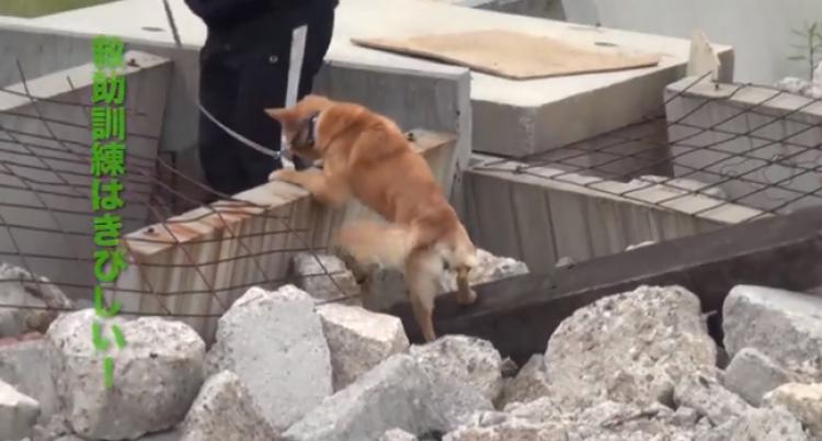 Czy ten niewystraszony pies przyponiga kogoś, kto jeszce kilka miesięcy temu moczył się ze strachu?