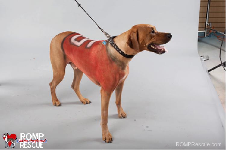 Pies w koszulce twojej ulubionej drużyny piłkarskie? Czemu nie!