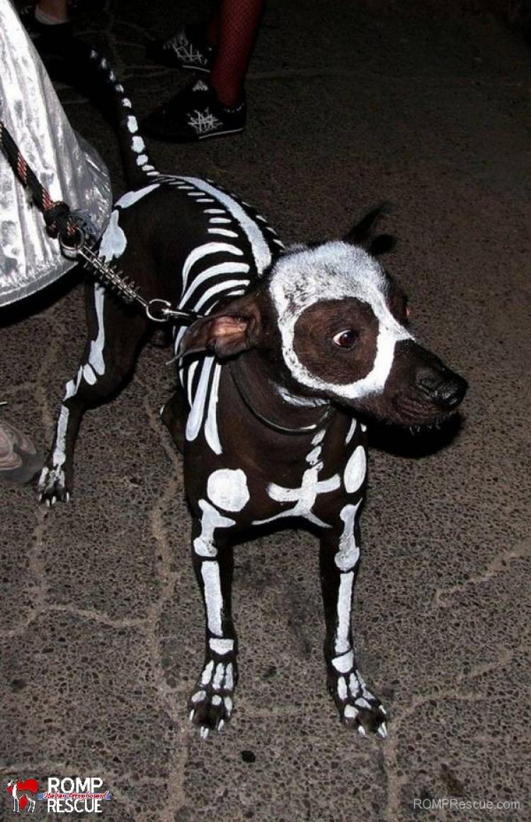 Upiorny pies szkieletor.