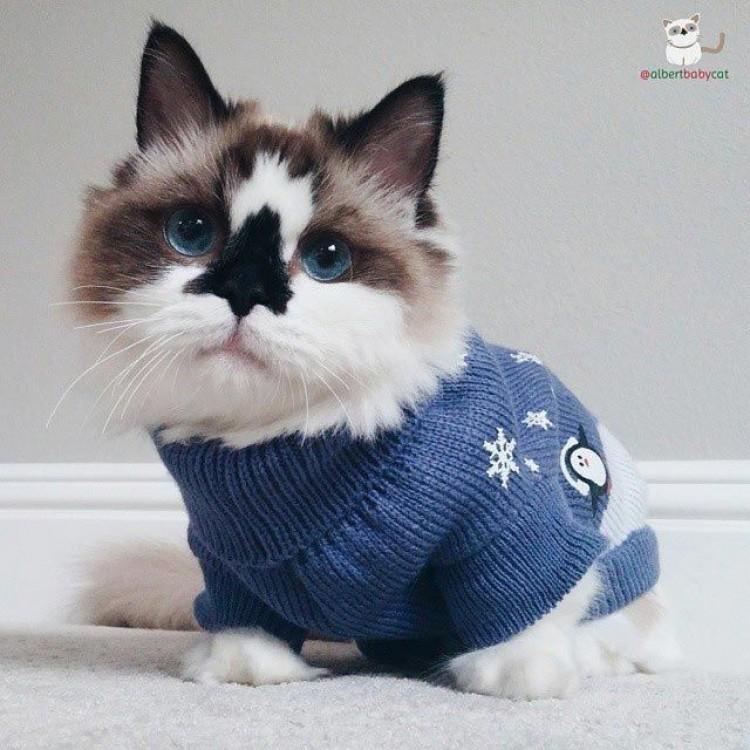 W każdym modnym sweterku mu do twarzy.