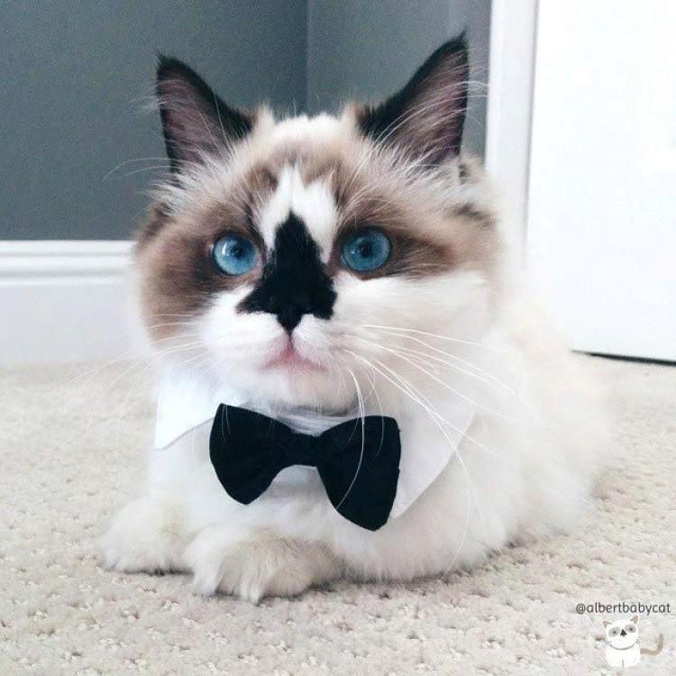 Zdecydowanie może pretendować na miano najlepiej ubranego kota.