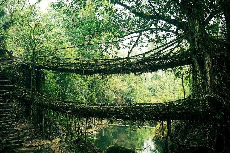 Żywy most w Indiach