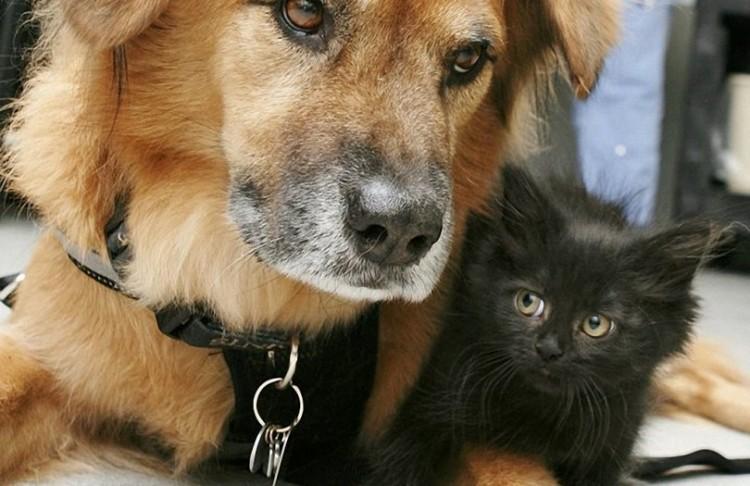 Pies Buts, który dorabia jako kotowa niania.