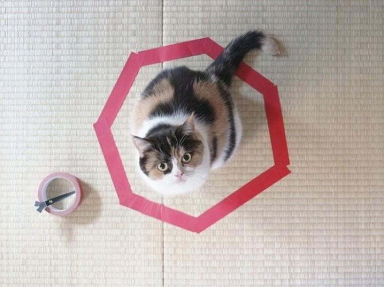 Pułapka dla kota wygląda tak.