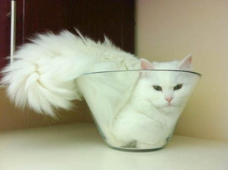 Koty są cieczą... jak byście nie wiedzieli.