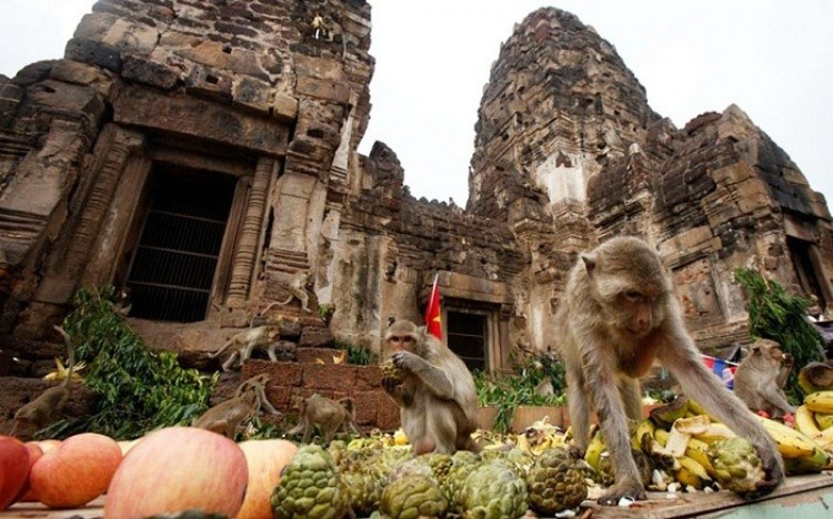 Monkey Buffet Festival (Tajlandia).