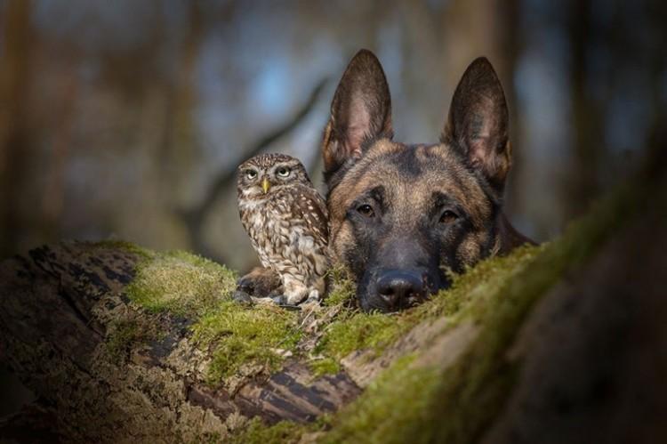 Pies i sowa, którzy nie mogą żyć jeden bez drugiego.