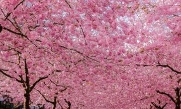 Uliczki, rozkwitające wraz z nadejściem wiosny.