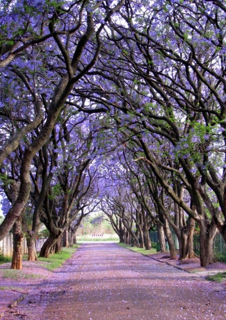 Cullinan, Republika Południowej Afryki.