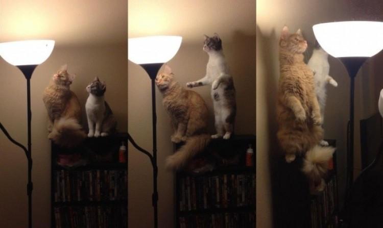 Są ciekawi świata.