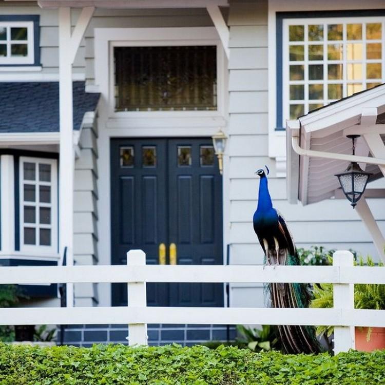 Rolling Hills - amerykańskie miasto, dom prawie 1000 pawi.