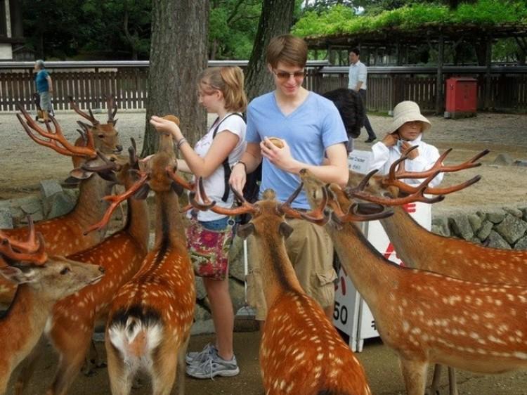Nara - japońskie miasto, gdzie mieszka ponad 1200 jeleni.