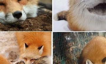 Republika zwierząt.