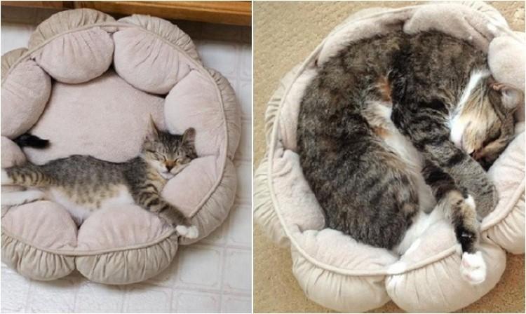 Jak dorastają koty.