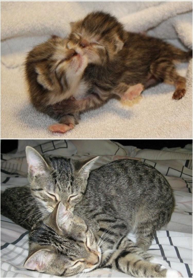 2 lata mineło, a one nadal kochają przytulaski.