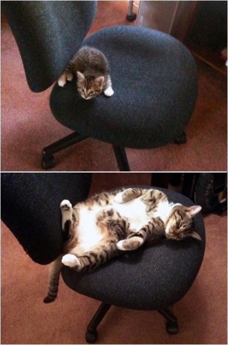 Krzesło dla kota.