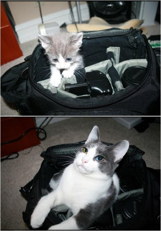 Uratowany kotek 6 miesięcy później.