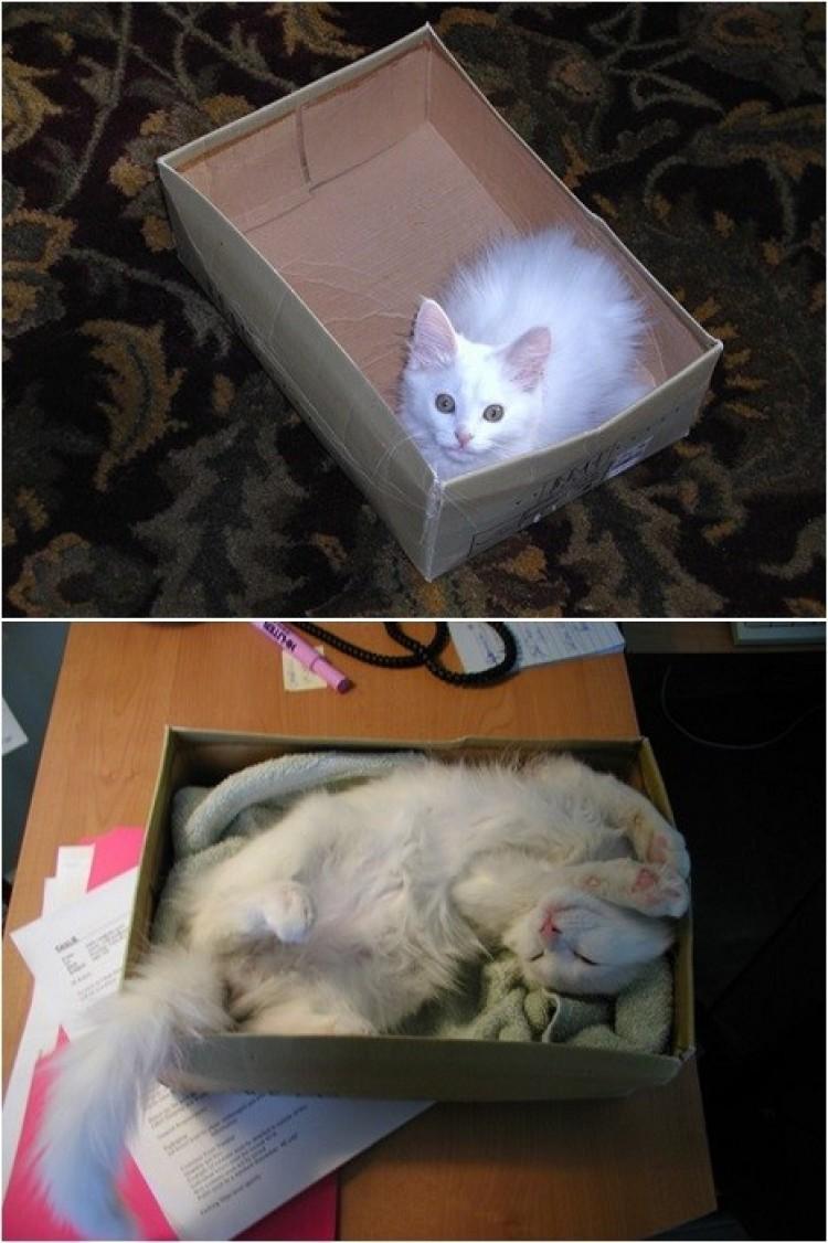 Pudełko - to ulubione miejsce każdego kota.