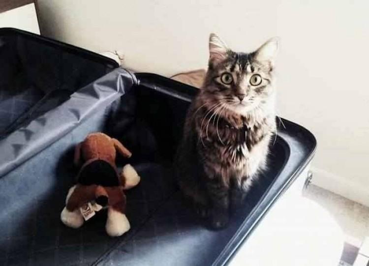 Zwierzęta, którzy nie wierzą, że mamy zamiar wyjechać bez nich.