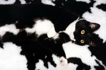 Czarno-biały kamuflaż.