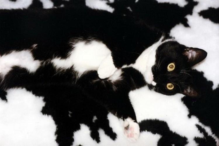 Znajdź kota: zwierzęta bawią się w chowanego.