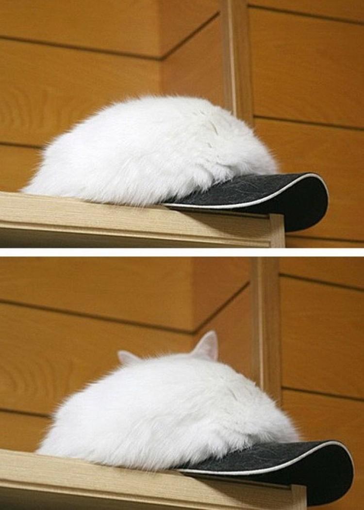 Jestem czapką, nie kotem.