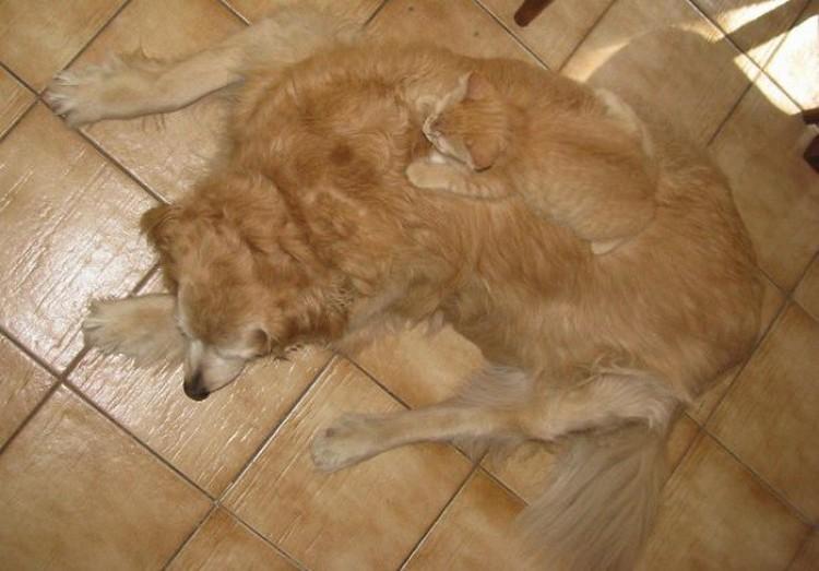 Kot i pies - partnerzy.