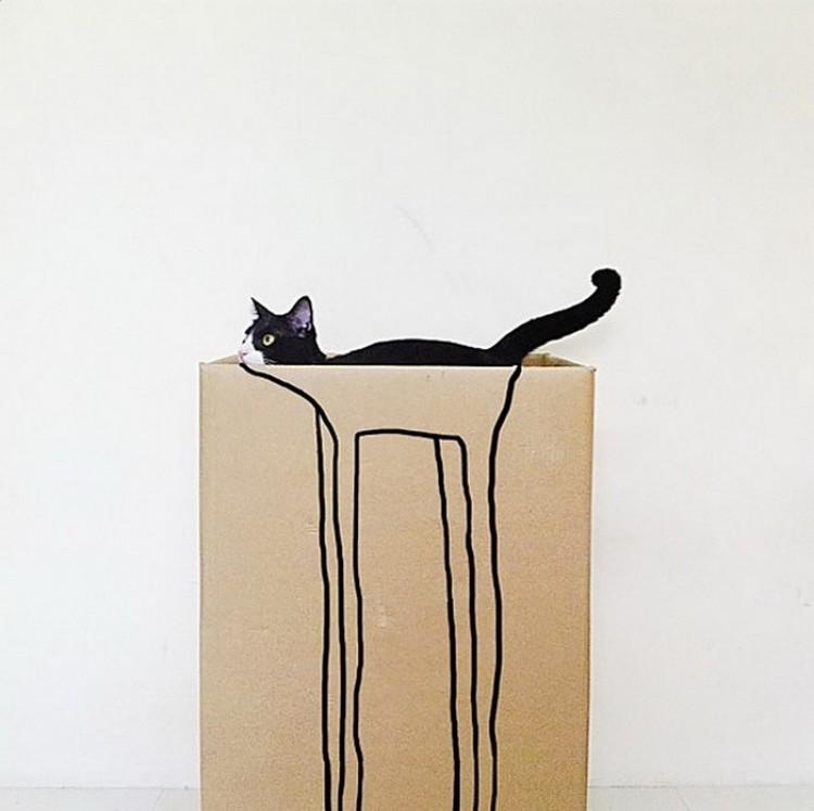 Kartonowe pudła to ulubione miejsce kotów.