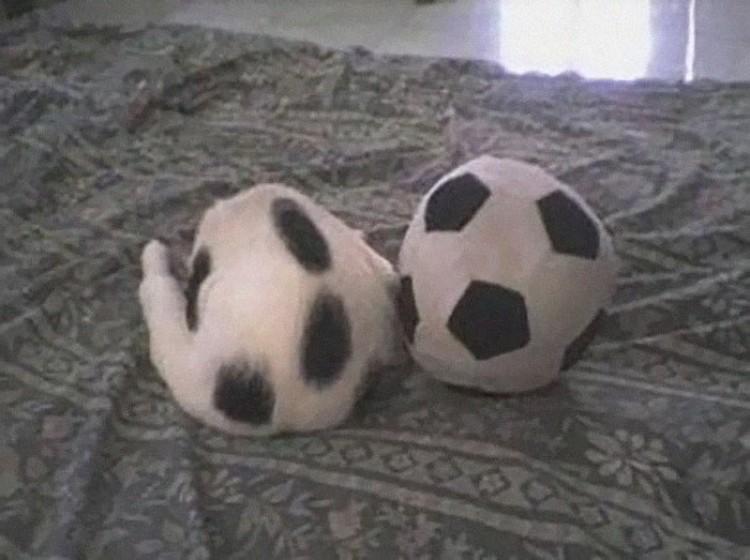 Kot i piłka: najważniejsze, by sięnie pomylić.