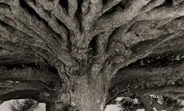 Kobieta poświęciła swoje życie, by fotografować najstarsze drzewa na świecie.