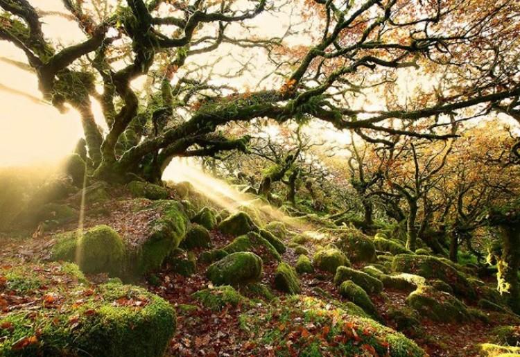 Vistmeńskie lasy, Anglia.