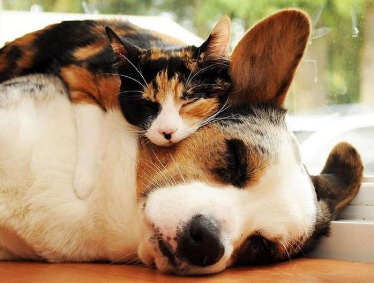 Kot i pies.