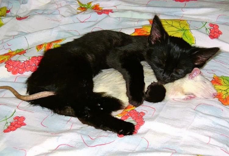 Kot ze szczurem.