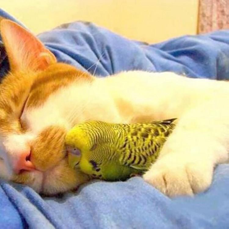 Kot z papugą.
