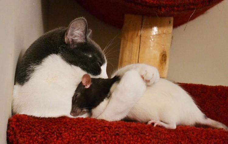 Kotek ze szczurem.