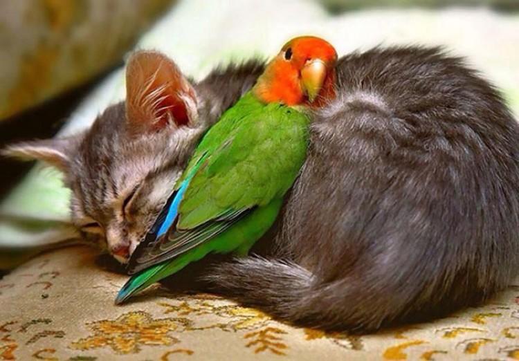 Papuga i kotek.