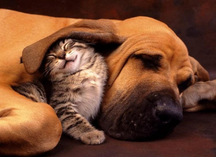 Pies i kot.