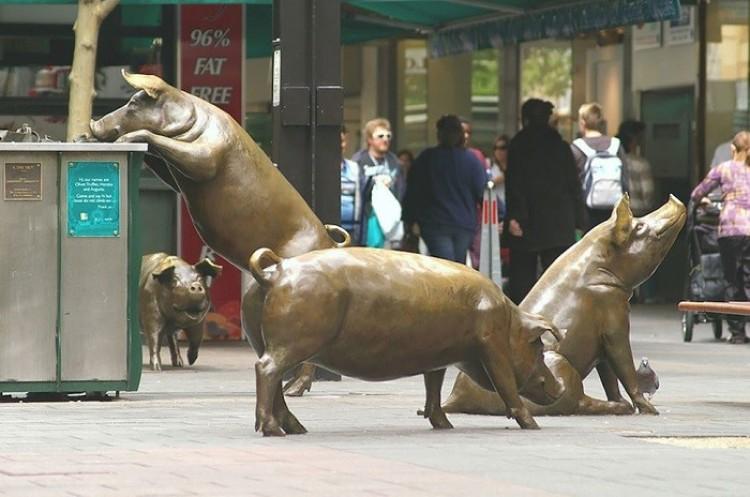 Świnie, Adelajda, Australia