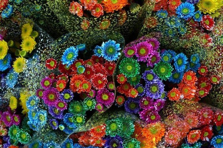 Targi kwiatów w Medellin
