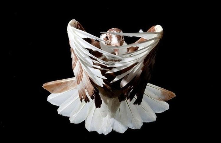 Fascynujące zdjęcia gołębi w trakcie lotu.