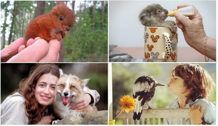 Dzikie domowe zwierzęta.