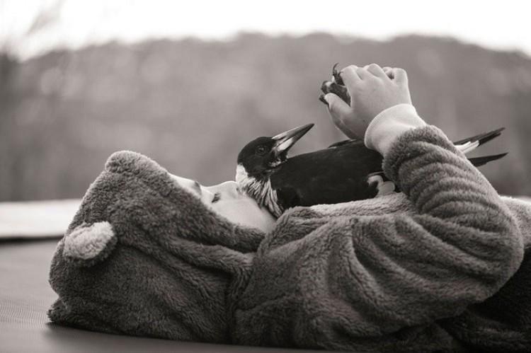 Sroka Penguin.