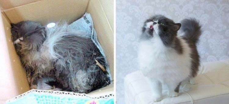 Kociaki przed i po tym jak ich zabrali ze schroniska.