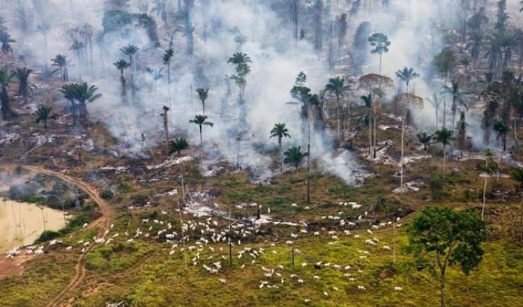 Amazońskie dżungli, Brazylia.