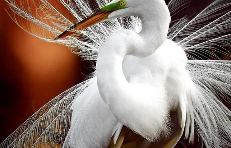 Najlepsze zdjęcia zwierząt zgłoszone do konkursu fotograficznego National Geographic Traveler Photo Contest.