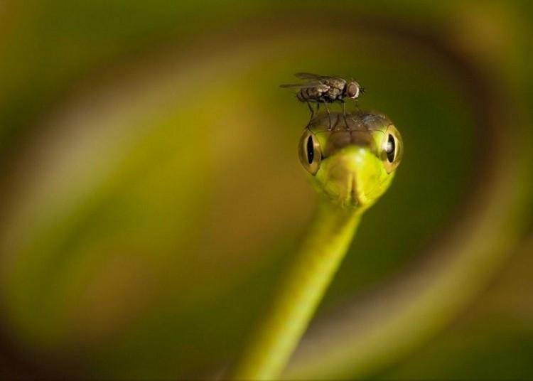 Czapka z muchy dla węża (Robin Moore)