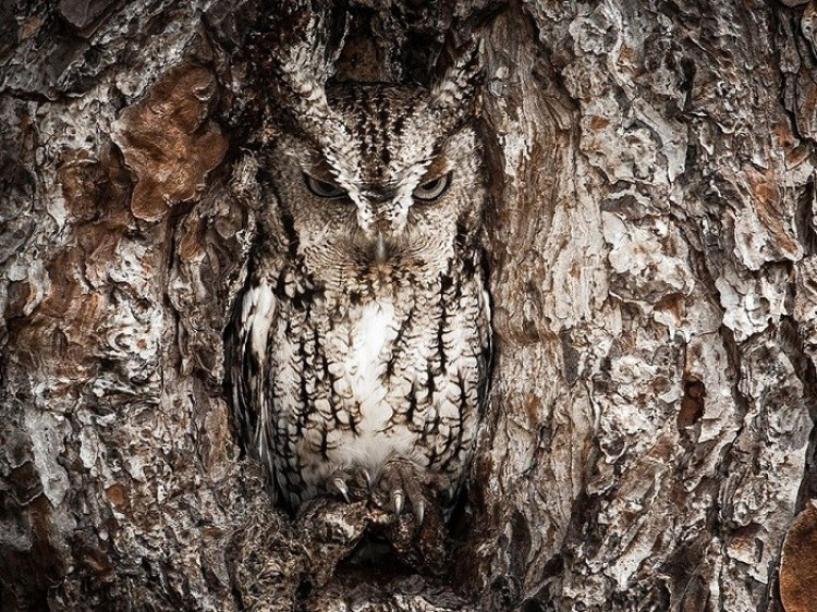 North American moth (Graham McGeorge)