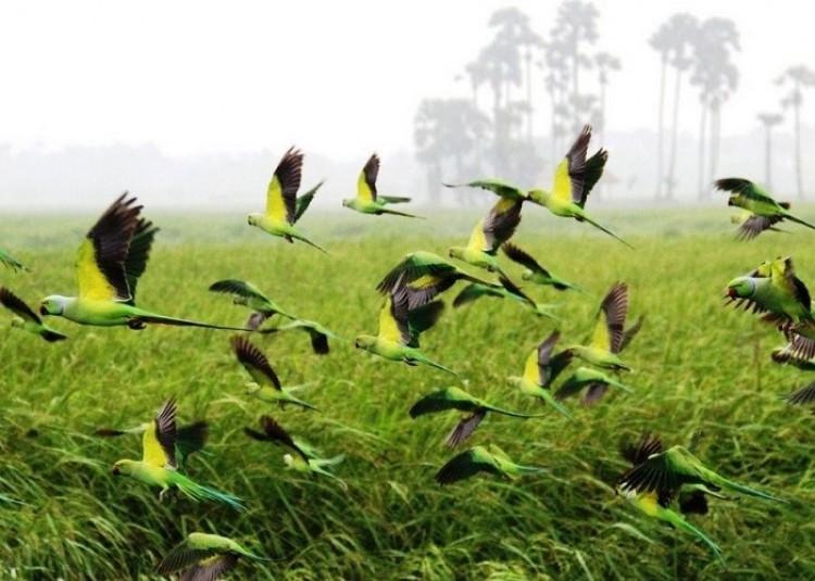 Stado papużek (Muraleetharan Rajasuntharam)