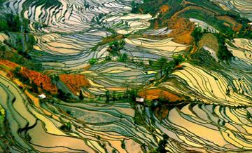 Krzywe zwierciadło: najciekawsze zdjęcia pól ryżowych.