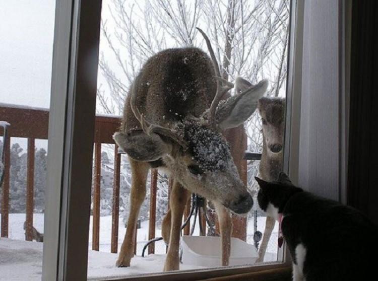 Słuchaj, kocie, możesz otworzyć drzwi?
